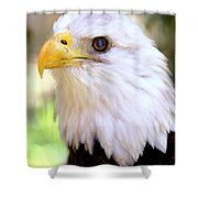 Bald Eagle 1 Shower Curtain