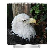 Bald Eagle #8 Shower Curtain