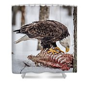 Bald Eagle At The Buffet Shower Curtain