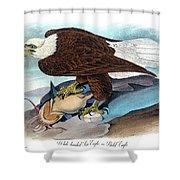 Bald Eagle Audubon Birds Of America 1st Edition 1840 Royal Octavo Plate 14 Shower Curtain