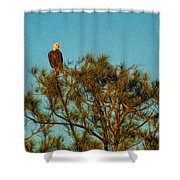 Bald Eagle Burnt Store Marina Florida Shower Curtain