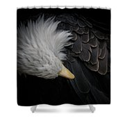 Bald Eagle Cleaning Shower Curtain