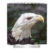 Bald Eagle Close Up Shower Curtain