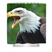 Bald Eagle Close Up Shower Curtain