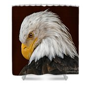 Bald Eagle Contemplation Shower Curtain by Sue Harper
