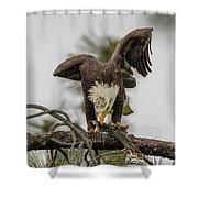 Bald Eagle Eating Fish Shower Curtain