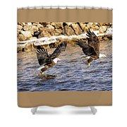 Bald Eagle Fishing Pano Shower Curtain