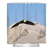 Bald Eagle Flying In Alaska Shower Curtain