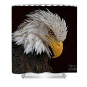 Bald Eagle - Head Bowed Shower Curtain by Sue Harper
