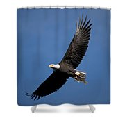 Bald Eagle I Shower Curtain