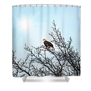 Bald Eagle In A Tree Enjoying The Sunlight Shower Curtain