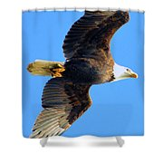 Bald Eagle In Flight Shower Curtain