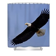 Bald Eagle In Flight Shower Curtain by John Hyde - Printscapes