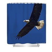 Bald Eagle In Flight-signed-#2709 Shower Curtain
