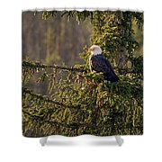 Bald Eagle In Pine Shower Curtain