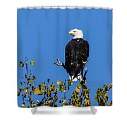 Bald Eagle In The Tree Shower Curtain