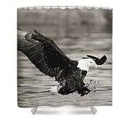 Bald Eagle Landing Shower Curtain