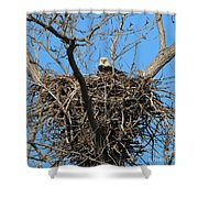 Bald Eagle Lookout  3661 Shower Curtain