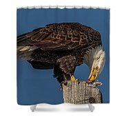 Bald Eagle Lunch Shower Curtain