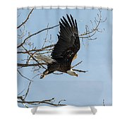 Bald Eagle Makes An Aggressive Dive Shower Curtain