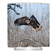 Bald Eagle Near Itasca Shower Curtain