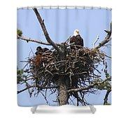 Bald Eagle Nest Shower Curtain