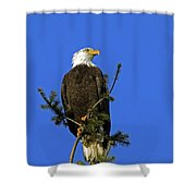 Bald Eagle On Blue Shower Curtain