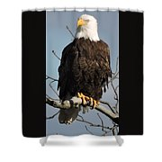 Bald Eagle Perched On Branch On A Windy Day Shower Curtain