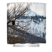 Bald Eagle Perched-signed-#4008 Shower Curtain