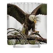 Bald Eagle Picking Up Fish Shower Curtain