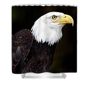 Bald Eagle - Pnw Shower Curtain