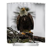 Bald Eagle Protecting His Fish Shower Curtain