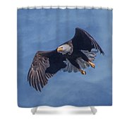 Bald Eagle Ready For A Treat Of Interest Shower Curtain