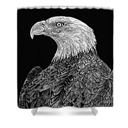 Bald Eagle Scratchboard Shower Curtain