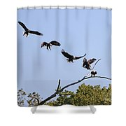 Bald Eagle Sequence  1277 Shower Curtain