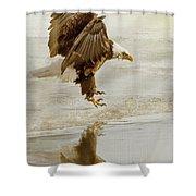 Bald Eagle Series #1 - Eagle Is Landing Shower Curtain