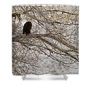 Bald Eagle-signed-#4879 Shower Curtain