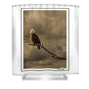 Bald Eagle Storm Shower Curtain