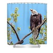 Bald Eagle Warning Shower Curtain