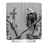 Bald Eagle Warning In Black And White Shower Curtain