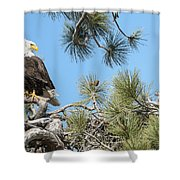 Bald Eagle With Nestling Shower Curtain