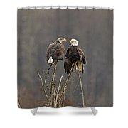 Bald Eagles Balancing Shower Curtain