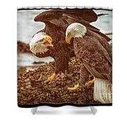 Bald Eagles Family Discussion Shower Curtain