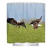 Bald Eagles Shower Curtain