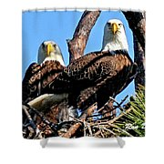Bald Eagles In Nest Shower Curtain