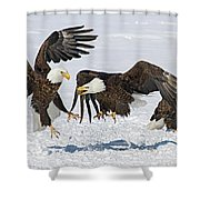 Bald Eagle's Shower Curtain by Wesley Aston