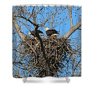 Bald Eagles Working On The Nest   3682 Shower Curtain