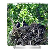 Bald Eaglet's 5 Wks 2 Shower Curtain