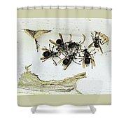Bald Faced Hornets Shower Curtain
