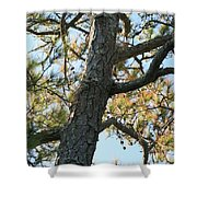 Bald Head Tree Shower Curtain